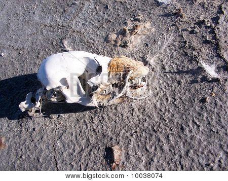 Skull remains