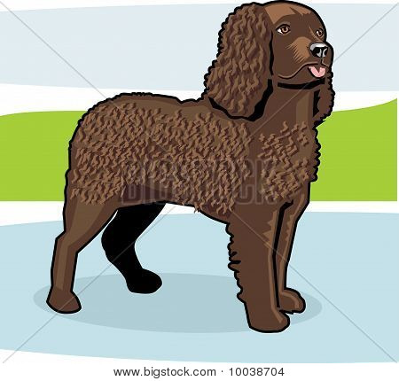American Water Spaniel Color.eps