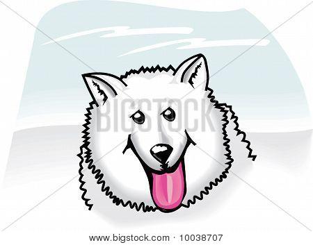 American Eskimo Dog-cartoon