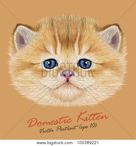Vector Portrait of Domestic Kitten