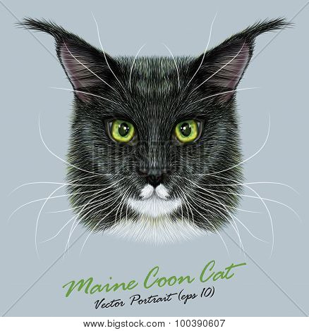 Vector Portrait of Maine Coon Cat