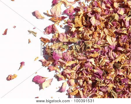 Scattered dried petals of tea rose on white background