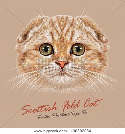 Vector Portrait of Scottish Fold Cat