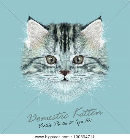 Vector Illustrative Portrait of Domestic Kitten