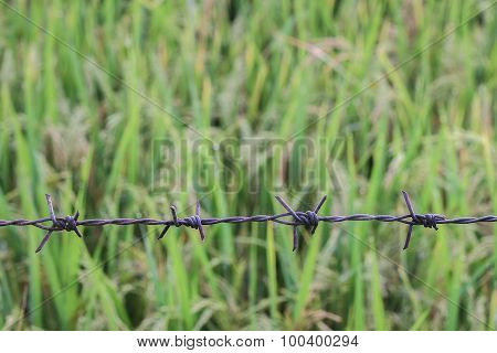 close up of a farmers barbed wire fence.