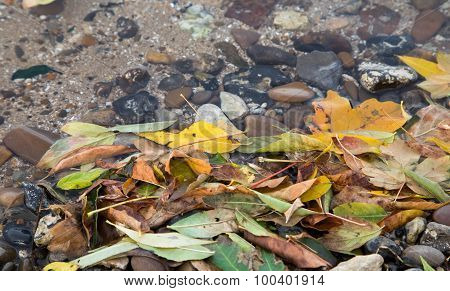 Autumnal colored leaves in water.