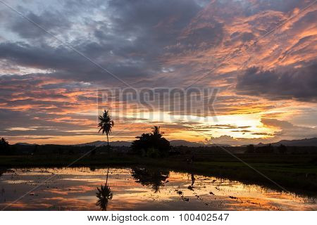 Beautiful Cornfield sunrise\ sunset reflected in water