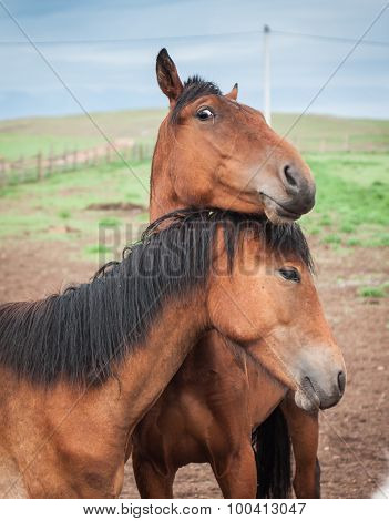 Horses In The Buryat Village, Olkhon, Lake Baikal, Russia