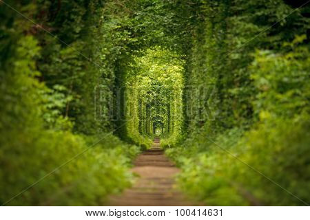 Beautiful long tunnel of love in ukraine