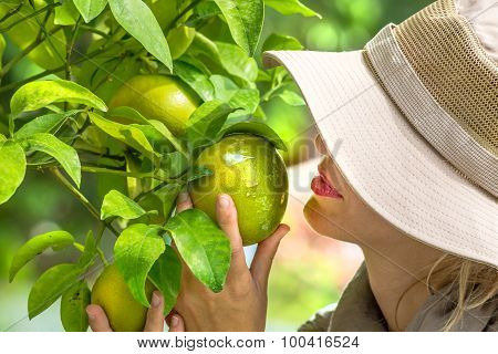 Farmer Checking Lemons