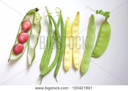 Beans Collection
