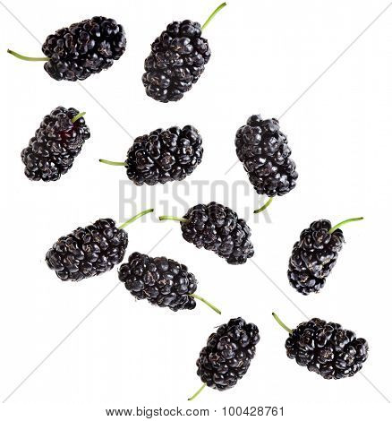 Mulberries  Isolated on white background