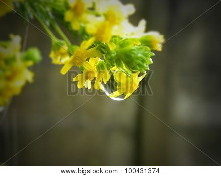 Honey flower with water droplet