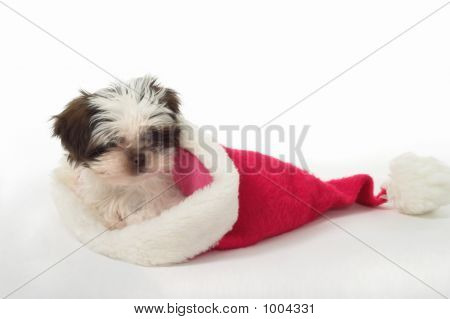 Puppy In Santa Hat 3
