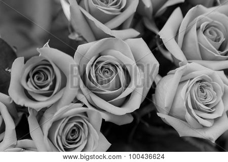 B/w Beautiful Red Roses Vintage Style