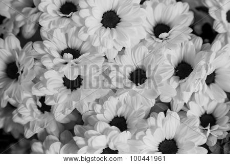 Monochrome Flower Group