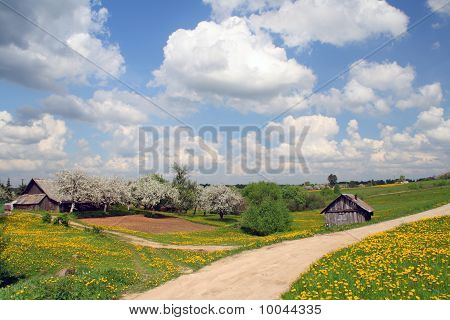 Rural Landscape With Blossoming Dandelions