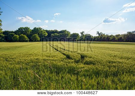 Rural Nature Landscape - Field And Forest / Trees