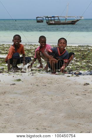 Three African Boys Harvested Sea Animals In The Surf Zone.