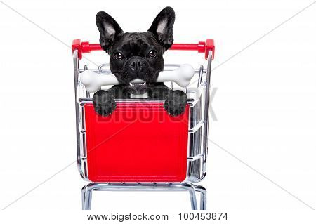 Shopping Cart Dog