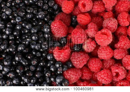 Mix of different berries as background