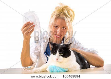 Veterinarian therapy