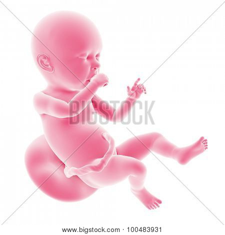 illustration of the fetal development - week 40