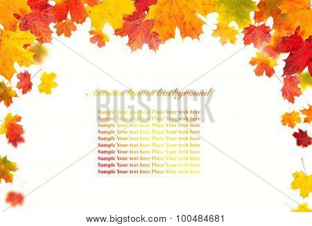Autumn leaves with copyspace. Isolated on white background