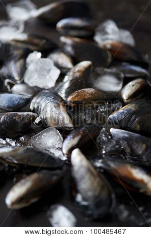 Fresh raw mussels kept fresh with ice