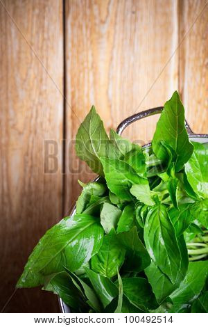 Fresh green basil in colander on a wooden table