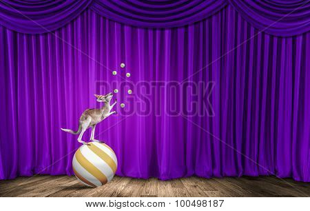 Circus animals standing in stack and balancing on ball