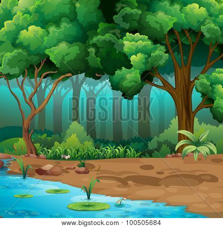 River run through the jungle illustration