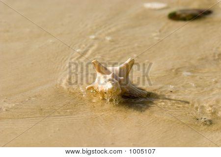 Seashell 5