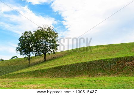 tree on field with bluesky background