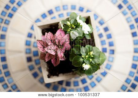 Planter with Flowers on Mosaic Tabletop