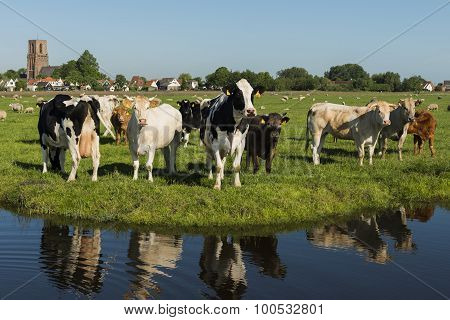Ransdorp With Cows And Ditch