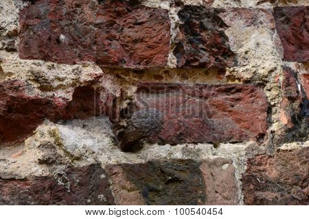 Old Brickwork With Wrought Old Nail Driven Into The Wall