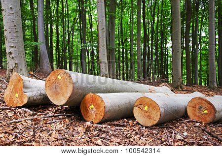 Wood logging in a forest