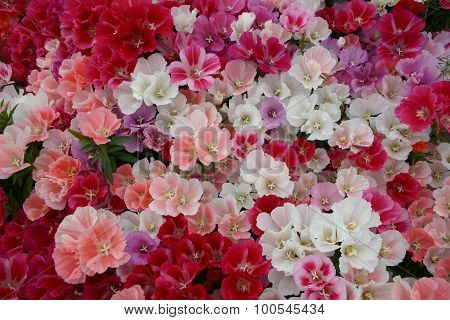 Massed blooms of pink, red, lilac and white flowers