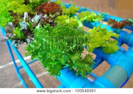 Veget Hydroponic.