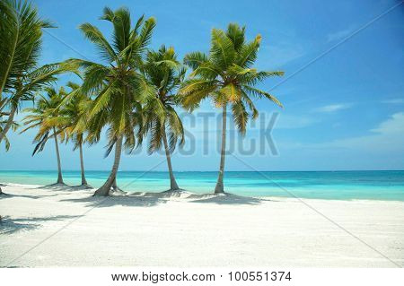 Photo of a beach landscape of grey-haired top in the paradise of Dominican republic
