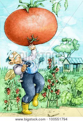 Farmer And Tomato Gmo