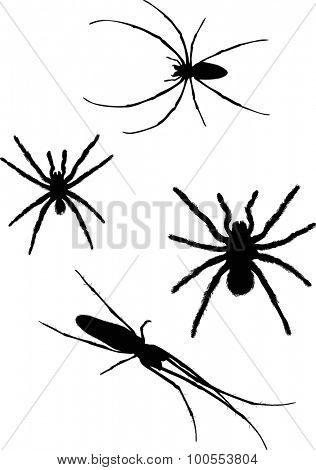 illustration with four spider silhouettes isolated on white background