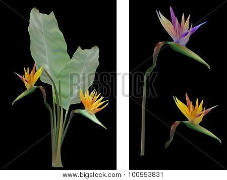 illustration with blossoming green large plant isolated on black background