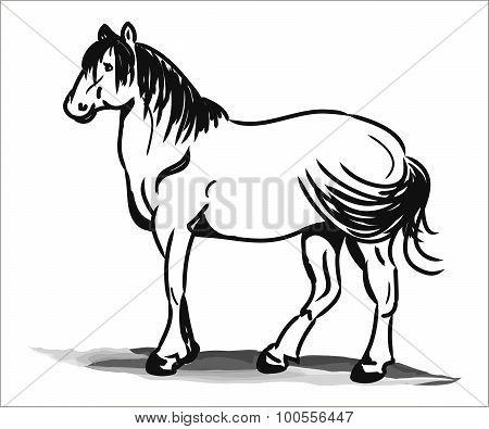 Stallion Black And White Child Picture