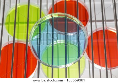 Petri dishes on incubator shelves.