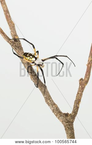 Top View Of Colorful Spider