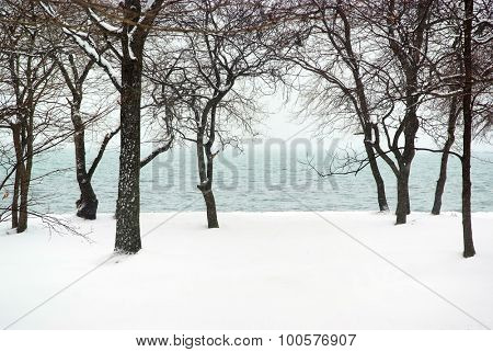 snowfall in the sea coastal forest