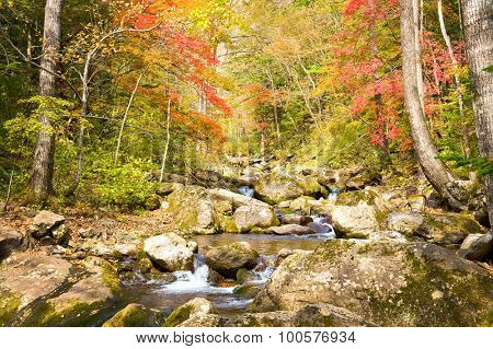 fall forest stream Elomovsky with red maple trees in russian Primorye