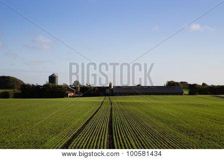 Jutland Farm